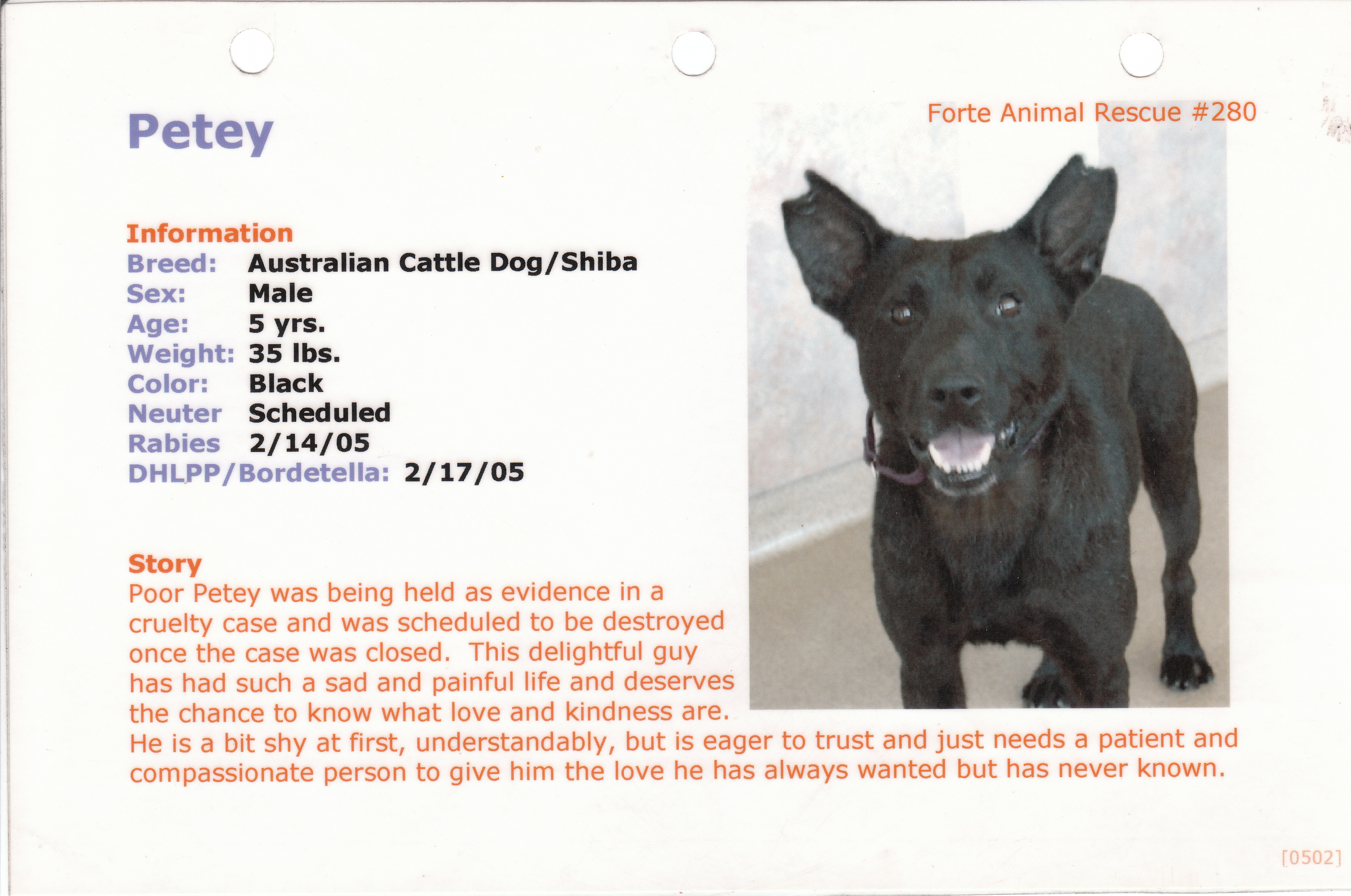 Petey Adoption Ad
