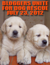 http://www.dogrescuesuccess.com/wp-content/uploads/2012/05/july-dr02.jpg
